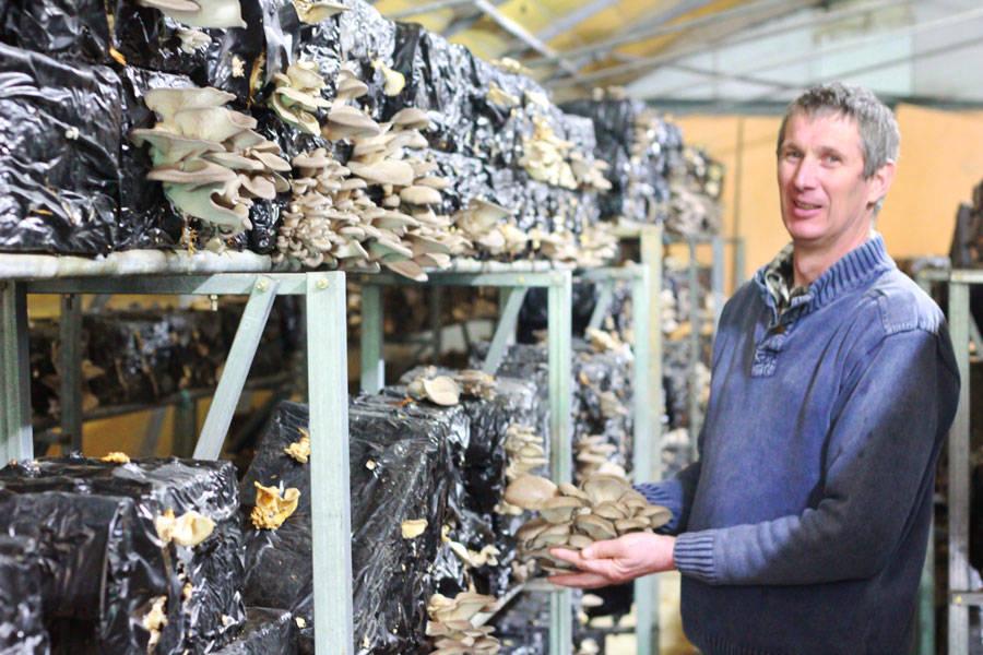 Champignonnière de l'Orme Rond - Producteur de champignons - La Ruche qui dit Oui ! à la maison