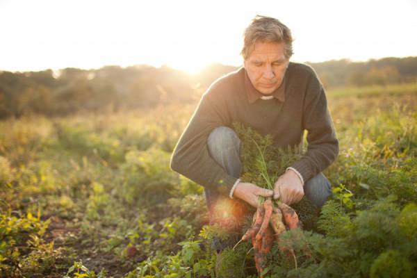 La Coopérative Bio d'Île-de-France - Coopérative d'agriculteurs - La Ruche qui dit Oui ! à la maison