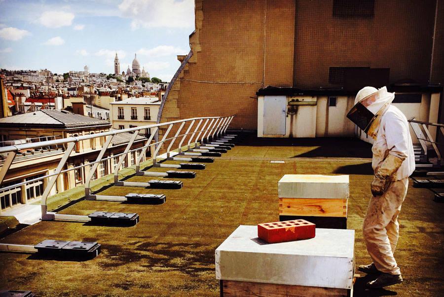 Abeilles et miel - Apiculteurs - La Ruche qui dit Oui ! à la maison