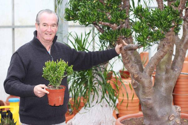 Les serres Paumier - Horticulteur - La Ruche qui dit Oui ! à la maison