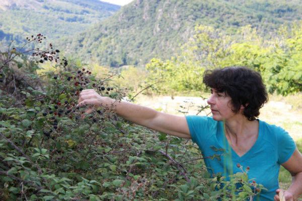 Aigre doux Sud Cévennes - Productrice de vinaigre - Le Comptoir Local