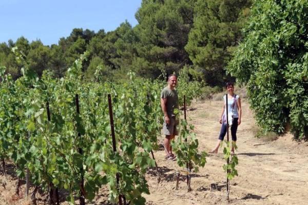Domaine Sibille - Vigneron - La Ruche qui dit Oui ! à la maison