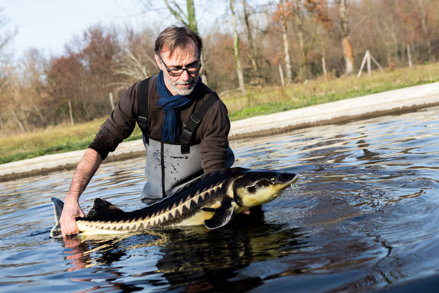 Caviar de Neuvic - pisciculteur - La Ruche qui dit Oui ! à la maison