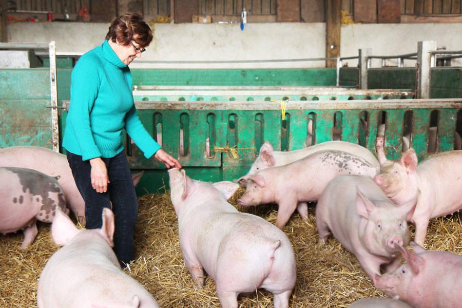 Ferme de Moneuse - Eleveur de porcs et producteur laitier - La Ruche qui dit Oui ! à la maison