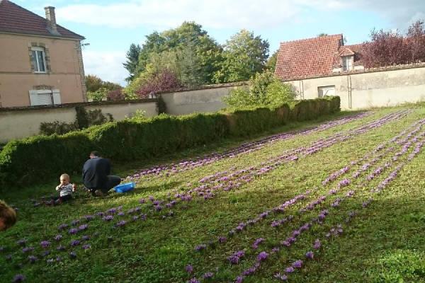 Appellation Safran - Producteur de safran - La Ruche qui dit Oui ! à la maison