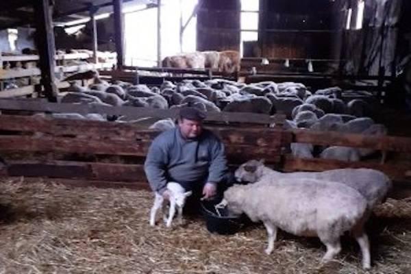 Bruno Mordacq - Eleveur de moutons - La Ruche qui dit Oui ! à la maison
