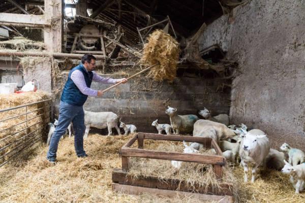 Le Goût des Prés - Eleveurs de moutons - La Ruche qui dit Oui ! à la maison