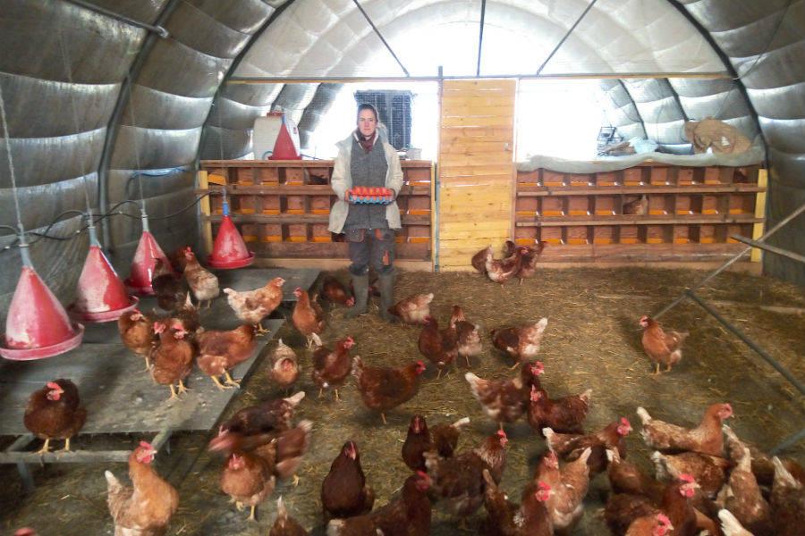 Ferme du Pas de Côté - Exploitation céréalière, maraîchère et élevage de poules pondeuses  - La Ruche qui dit Oui ! à la maison
