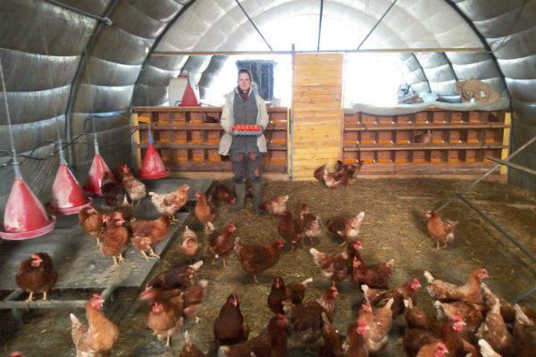 Ferme du Pas de Côté - Exploitation céréalière, maraîchère et élevage de poules pondeuses  - Le Comptoir Local