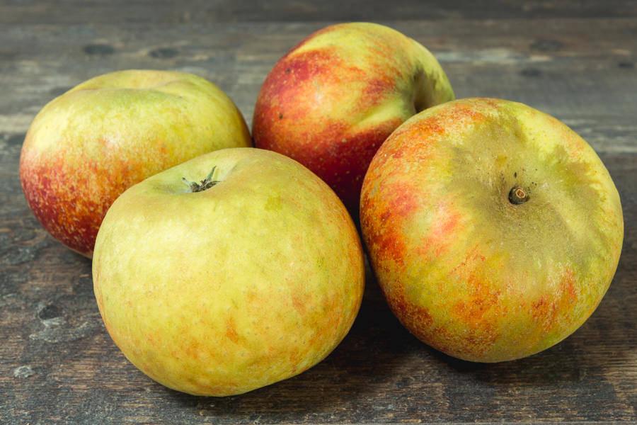 Pomme Cox - Vergers de Pomamour - La Ruche qui dit Oui ! à la maison