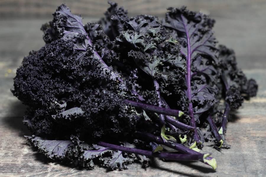 Chou Kale Violet BIO - Ferme Lafouasse - La Ruche qui dit Oui ! à la maison