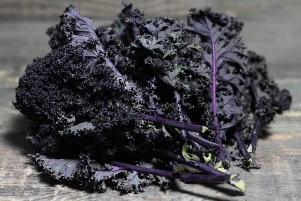 Chou Kale Violet BIO - Ferme Lafouasse
