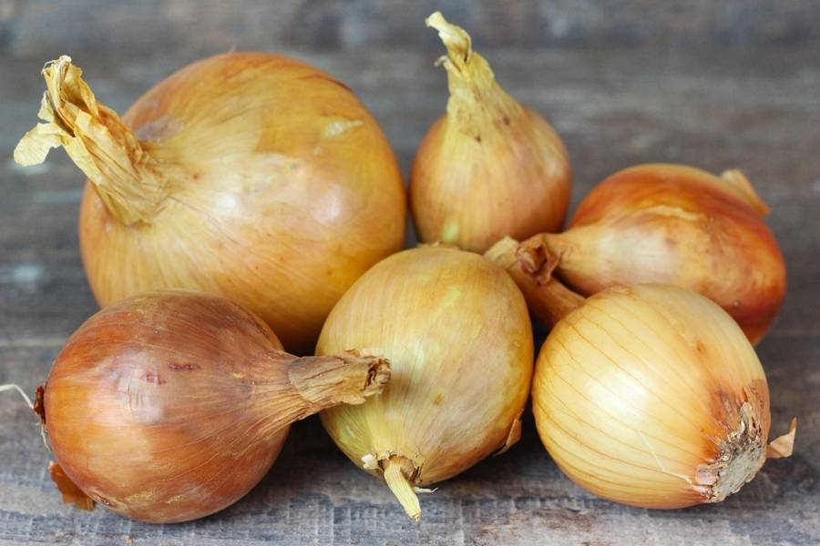 Oignons jaunes BIO - Les Potagers du Télégraphe - La Ruche qui dit Oui ! à la maison