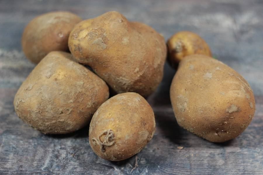 Pomme de Terre Agria BIO - Ferme Lafouasse - La Ruche qui dit Oui ! à la maison