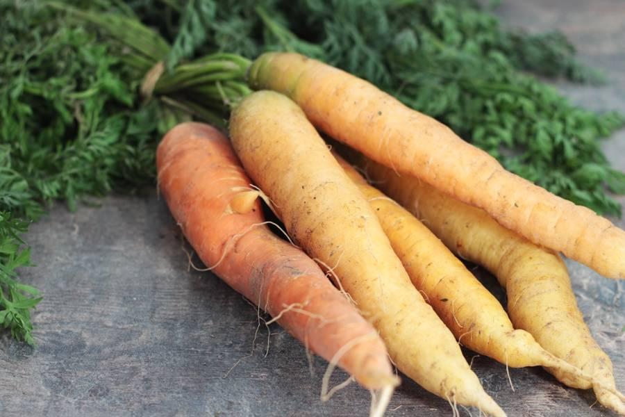 Jeunes carottes botte BIO - Les jardins de Courances - La Ruche qui dit Oui ! à la maison