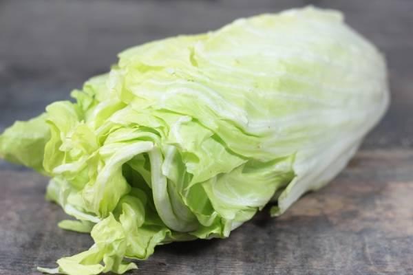 Salade pain de sucre BIO - Les jardins de Courances