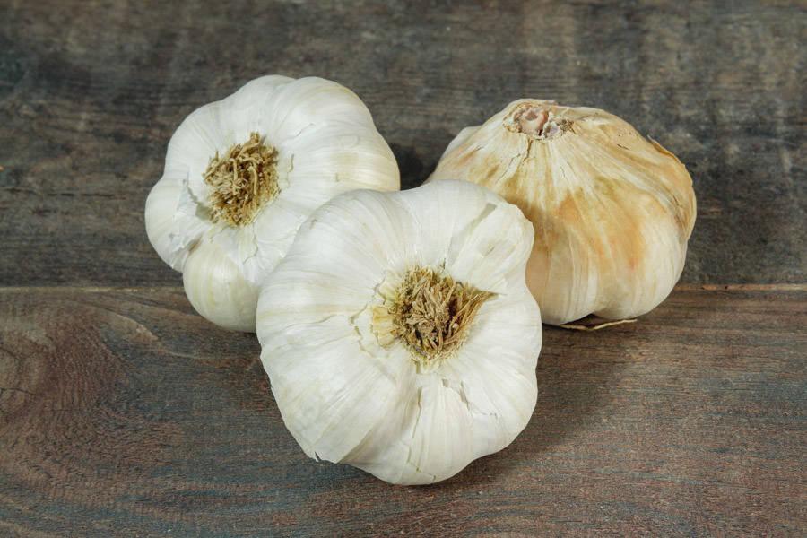 Ail BIO - Les Légumes de Planche - La Ruche qui dit Oui ! à la maison