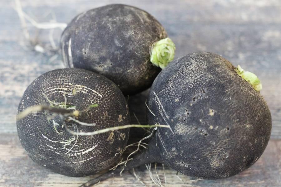 Radis noir rond BIO - Les Légumes de Planche - La Ruche qui dit Oui ! à la maison