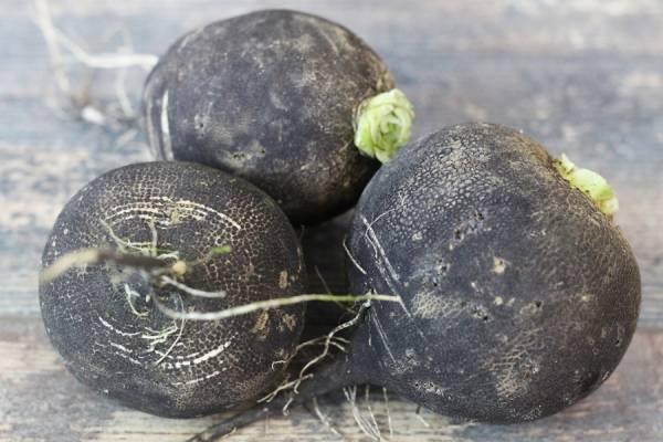 Radis noir rond BIO - Les Légumes de Planche