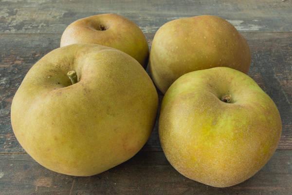 Pomme Canada Gris - Vergers de Molien