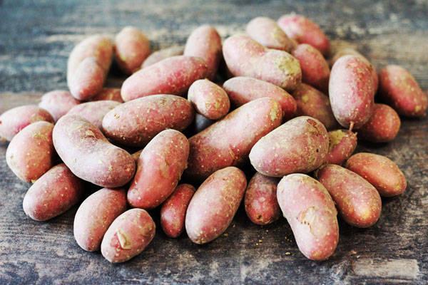 Pomme de Terre nouvelles ratte rouge grenaille - Les Légumes de Laura