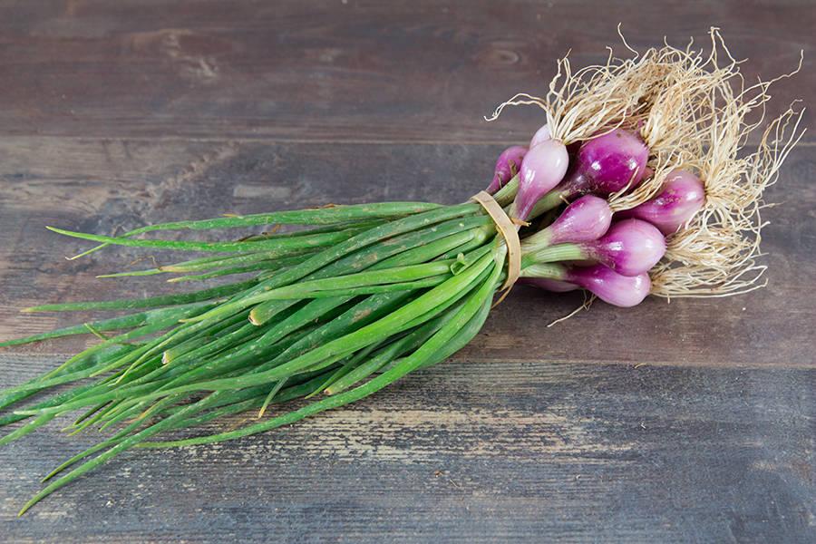 Oignons rouges botte - Cueillette Varet - La Ruche qui dit Oui ! à la maison