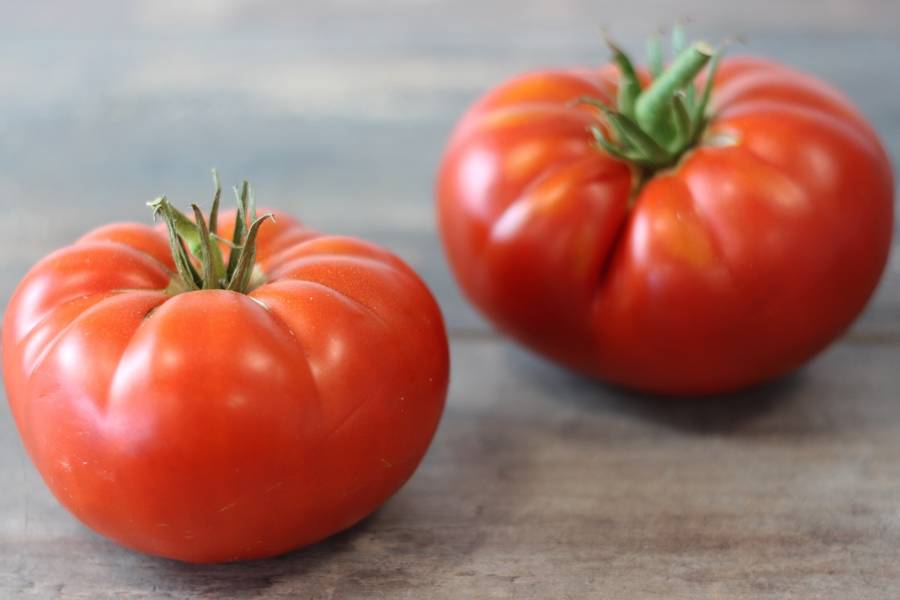 Tomate ancienne BIO - Le Potager de la Grenouillère - La Ruche qui dit Oui ! à la maison