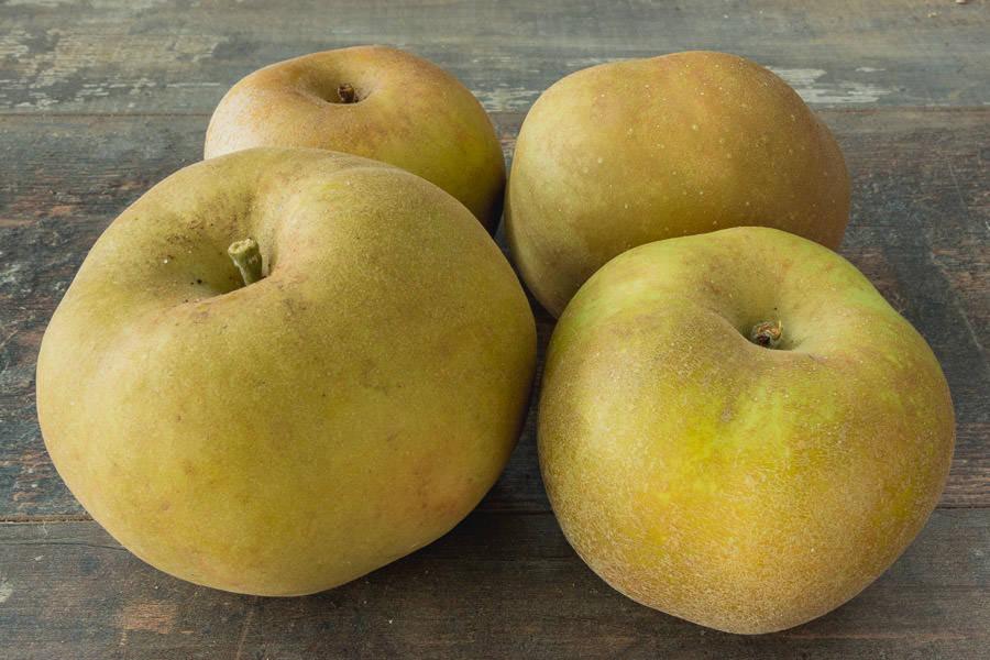 Pomme Canada Gris - Vergers de Pomamour - La Ruche qui dit Oui ! à la maison