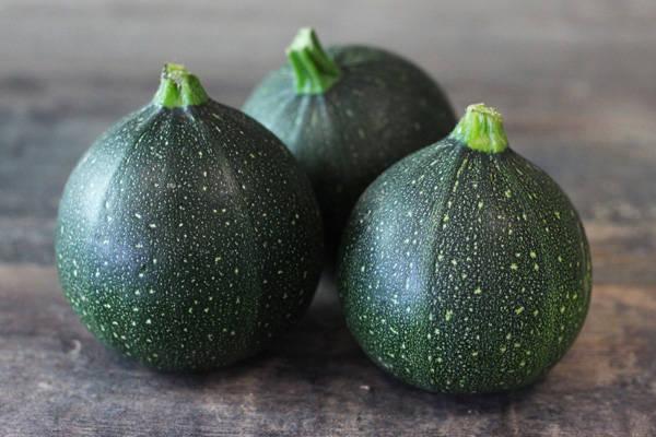 Courgette Verte Ronde BIO - Les Légumes de Planche