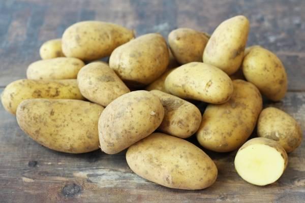 Pomme de terre Annabelle - Le Potager d'Olivier