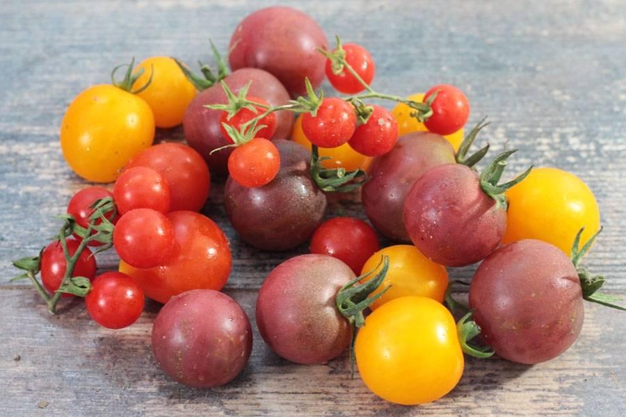 Tomate cerise  - Agripolis - La Ruche qui dit Oui ! à la maison