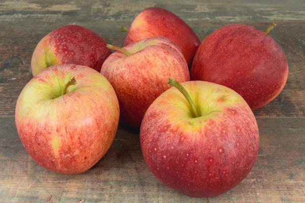 Pomme Royal Gala - Vergers de Molien