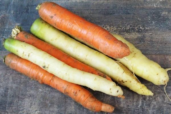 Mixte de carottes oranges et blanches - Le Potager d'Olivier