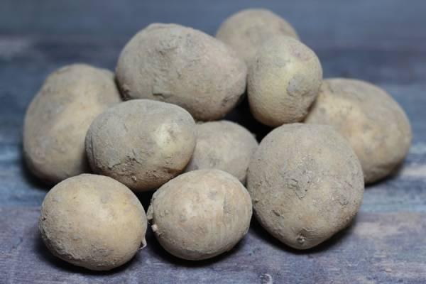 Pomme de Terre Carolus BIO - Ferme Lafouasse