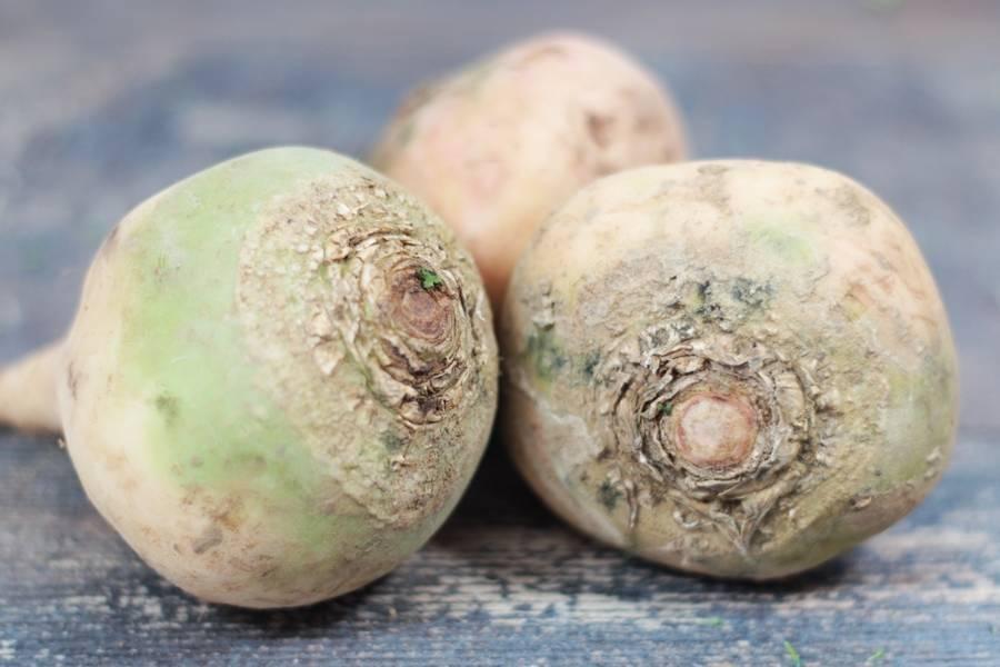 Betteraves blanches crues (en conversion BIO) - Les Légumes de Planche - La Ruche qui dit Oui ! à la maison
