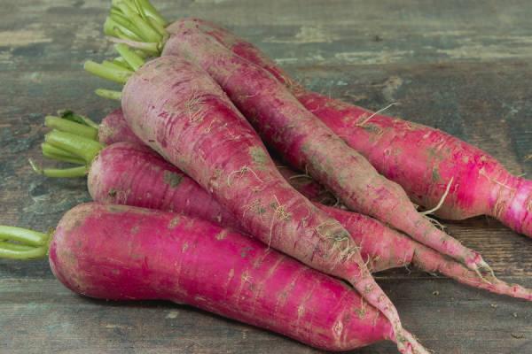 Radis rose de Chine Bio - Le Clos de Nonville
