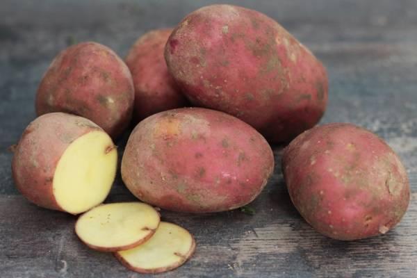 Pomme de terre Manitou BIO - Ferme de Chatenoy