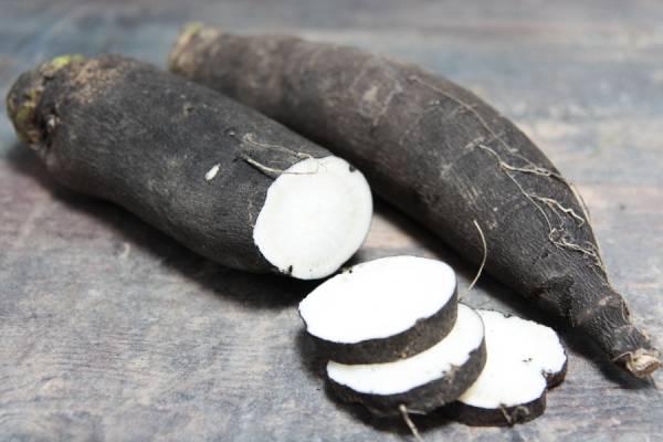 Radis noir - Les Légumes de Laura