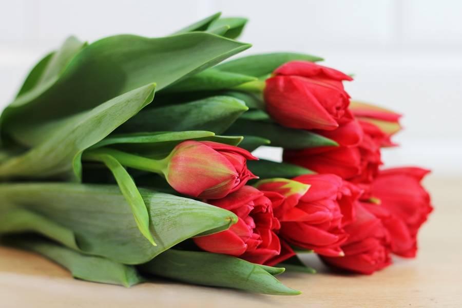 Tulipes rouges - Eric Fontyn - La Ruche qui dit Oui ! à la maison