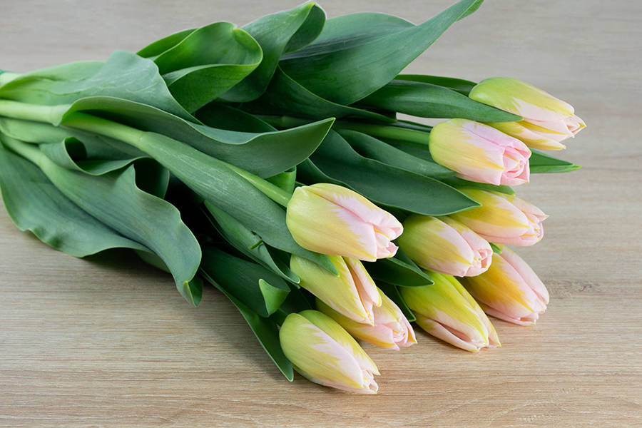 Tulipes roses - Eric Fontyn - La Ruche qui dit Oui ! à la maison