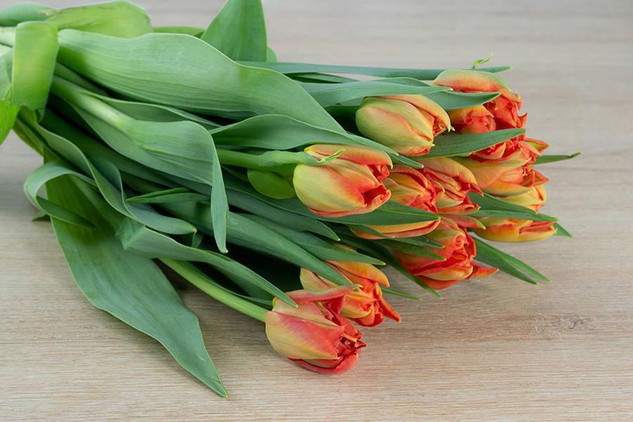 Tulipe orange - Eric Fontyn - La Ruche qui dit Oui ! à la maison