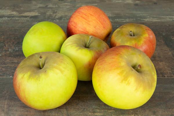 Pomme Reine des Reinettes - Vergers de Molien