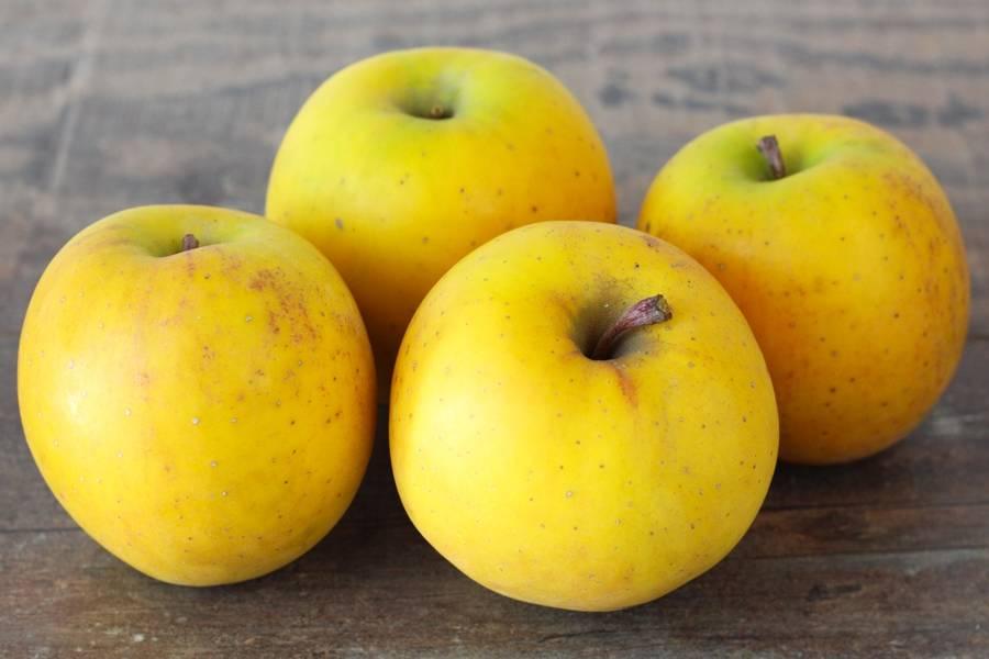 Pomme délice d'or - Vergers de Pomamour - La Ruche qui dit Oui ! à la maison