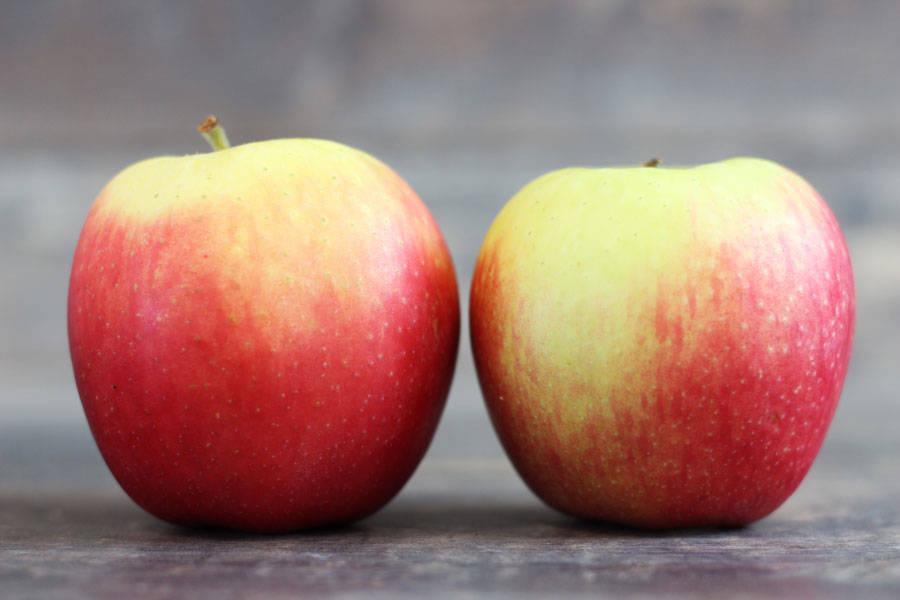 Pomme Jubilé - Vergers de Molien - La Ruche qui dit Oui ! à la maison
