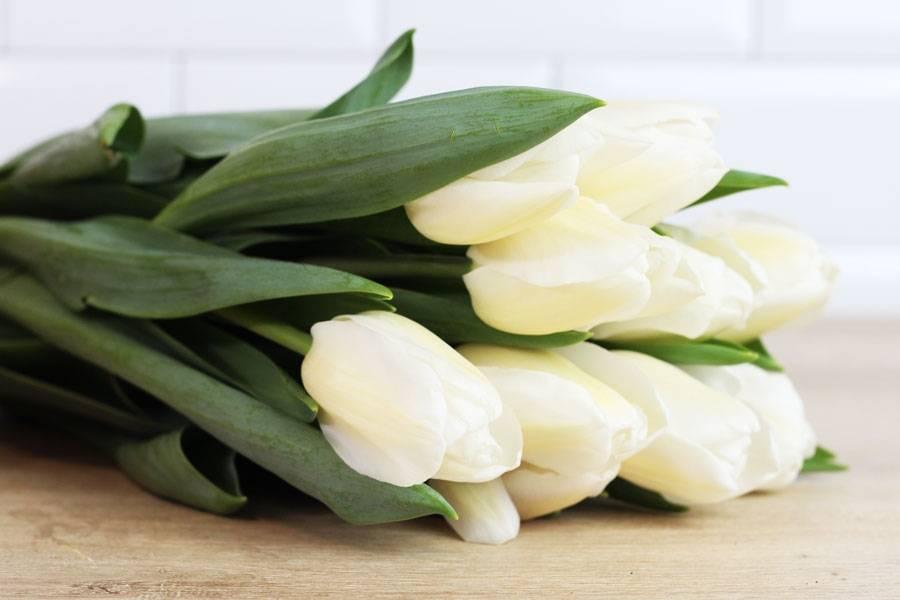 Tulipes blanches - Eric Fontyn - La Ruche qui dit Oui ! à la maison
