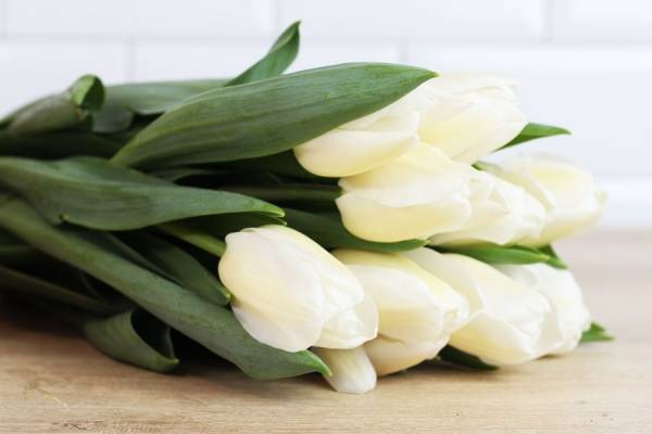 Tulipes blanches - Eric Fontyn