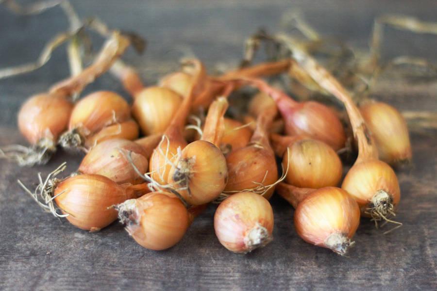 Echalote BIO - Les Légumes de Planche - La Ruche qui dit Oui ! à la maison