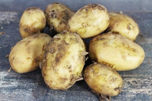 Pommes de terre nouvelle - Stéphane Milville