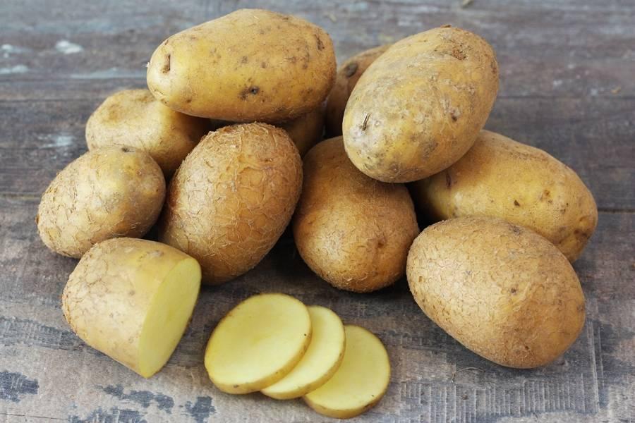 Pomme de terre Agria BIO - Le Potager de la Grenouillère - La Ruche qui dit Oui ! à la maison