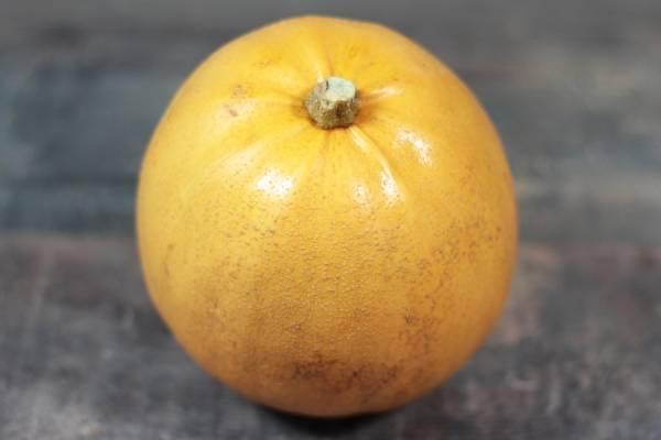 Courge Melonette Jaspée de Vendée Bio - Le Clos de Nonville